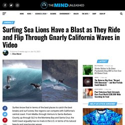 Surfing Sea Lions Have a Blast as They Ride and Flip Through Gnarly California Waves in Video