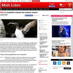 La surpêche menace tous les oiseaux marins