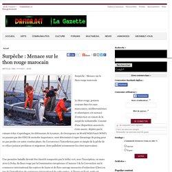 BLOG LE PECHEUR MAROCAIN - Surpêche Menace sur le thon rouge marocain