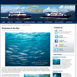 Surprises In the Sea -