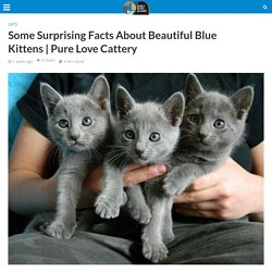 Some Surprising Facts About Beautiful Blue Kittens
