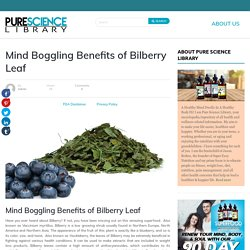 Health Benefits of Bilberry Leaf