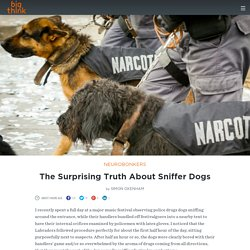 The Surprising Truth About Sniffer Dogs