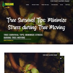 Tree Survival Tips: Minimize Stress during Tree Moving