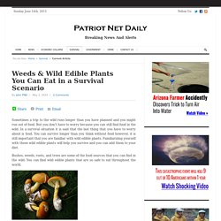 Weeds & Wild Edible Plants You Can Eat in a Survival Scenario - Patriot Net Daily