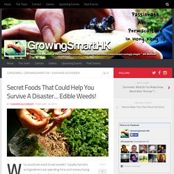 Secret Foods That Could Help You Survive A Disaster… Edible Weeds! - GrowingSmart.HK