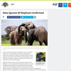 There Are Three Surviving Elephant Species And They Have A Mammoth Inheritance