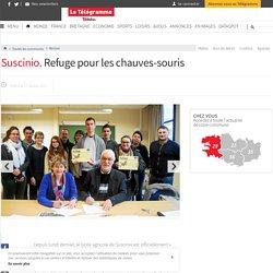 Suscinio. Refuge pour les chauves-souris - Morlaix - LeTelegramme.fr