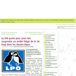 La LPO punie pour avoir fait suspendre un arrêté illégal de tir de loup dans les Hautes-Alpes