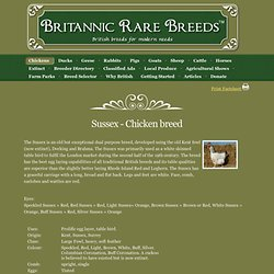 Sussex - Chicken breeds