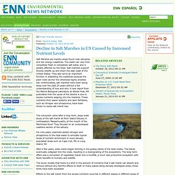 Decline in Salt Marshes in US Caused by Increased Nutrient Levels