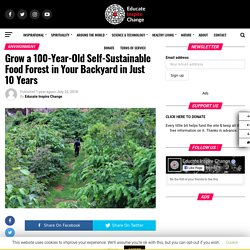 Grow a 100-Year-Old Self-Sustainable Food Forest in Your Backyard in Just 10 Years