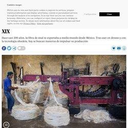 Sisal: El sustituto natural del plástico que se usaba en el siglo XIX