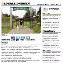 Här finns Sveriges enda lekland för hundar - Lokaltidningen