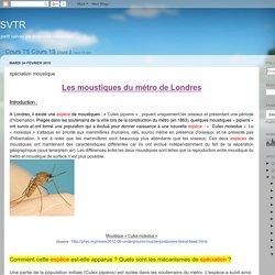 speciation-moustique