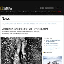 Swapping Young Blood for Old Reverses Aging
