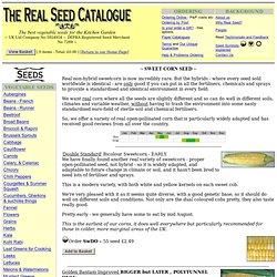 SweetCorn Seed