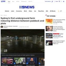 Sydney News: Inside Sydney's first underground farm