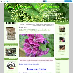 La MAUVE SYLVESTRE : légume insolite de saison et fleurs comestibles