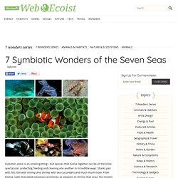 7 Symbiotic Wonders of the Seven Seas