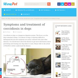 Symptoms and treatment of coccidiosis in dogs - WewPet