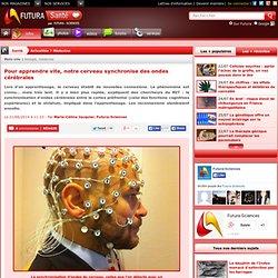 Pour apprendre vite, notre cerveau synchronise des ondes cérébrales