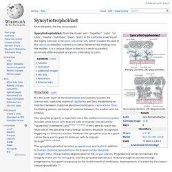 Syncytiotrophoblast