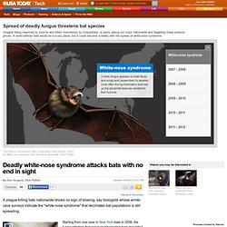 USATODAY 26/06/12 Deadly white-nose syndrome attacks bats with no end in sight