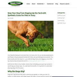 How Synthetic Grass for Pets in Tracy Stops Dogs From Digging