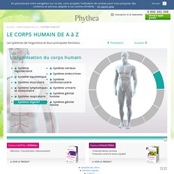 Système digestif - Phythea