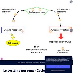 Le système nerveux - Cycle 4 by v_giudice on Genial.ly