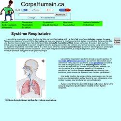 Le Système Respiratoire - pour oxygéner notre sang.