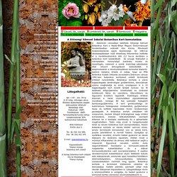 A Kós Károly Művészeti Szakközépiskola honlapja