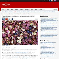 Spicy Szechuan Pepper Could Treat Chronic Pain - Health News