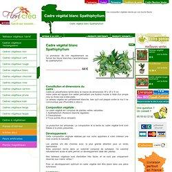 Cadre végétal blanc Spathiphyllum
