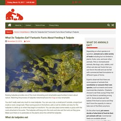 What Do Tadpoles Eat? Fantastic Facts About Feeding A Tadpole