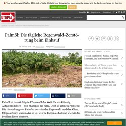Palmöl: die tägliche Urwaldzerstörung beim Einkauf