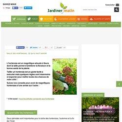 Taille des hortensias : tout savoir