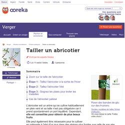 Tailler un abricotier - Verger