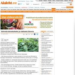 Valmista taimekaitseks ja väetiseks tõmmis