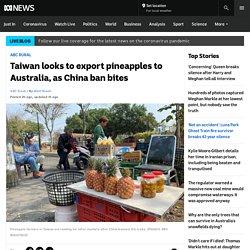 Taiwan looks to export pineapples to Australia, as China ban bites