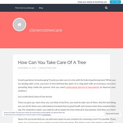 How Can You Take Care Of A Tree