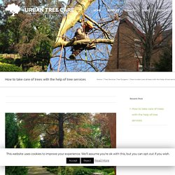 How to take care of trees with the help of tree services