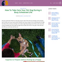 How To Take Care Your Pet Dog During A Busy Scheduled Life - Pet Price List