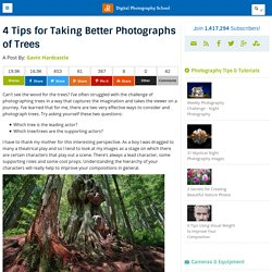 4 Tips for Taking Better Photographs of Trees