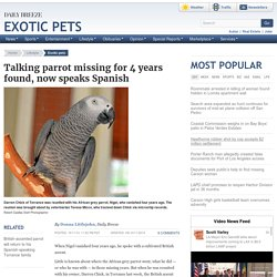 Talking parrot missing for 4 years found, now speaks Spanish