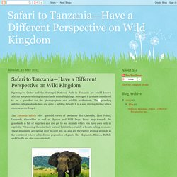 Safari to Tanzania—Have a Different Perspective on Wild Kingdom