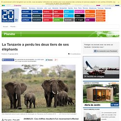 La Tanzanie a perdu les deux tiers de ses éléphants