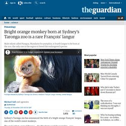 Bright orange monkey born at Sydney's Taronga zoo is a rare François' langur