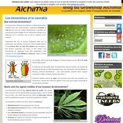 Les tarsonèmes et le cannabis